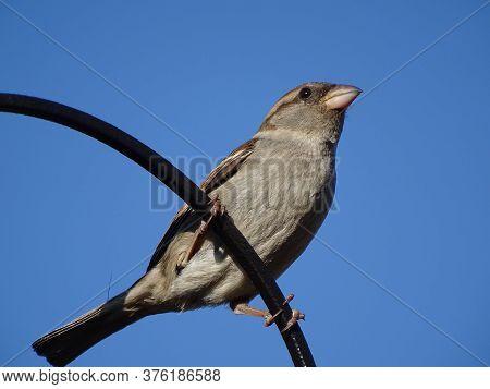 A Sparrow Perched On A Bird Feeder On A Sunny Day