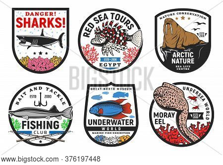 Sea And Underwater Animals Icons, Undersea Fishes Life And Ocean World Vector Signs. Underwater Worl