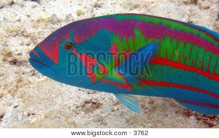 Tropical Fish 02