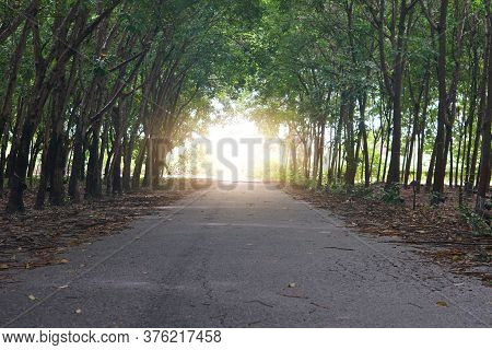 Asphalt Road With Rubber Plantations On Both Sides. Head To The Destination Destination Front.