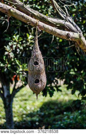 Bird Nest Hanging In The Park Of Ooty Tamilnadu
