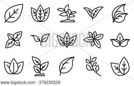 Basil Icons Set. Outline Set Of Basil Vector Icons For Web Design Isolated On White Background