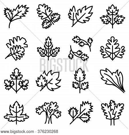 Parsley Icons Set. Outline Set Of Parsley Vector Icons For Web Design Isolated On White Background