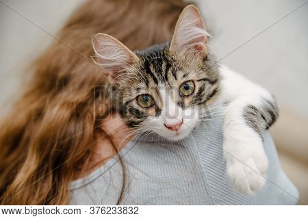 Young Woman Holding Cat On Hands. Girl With Cat.