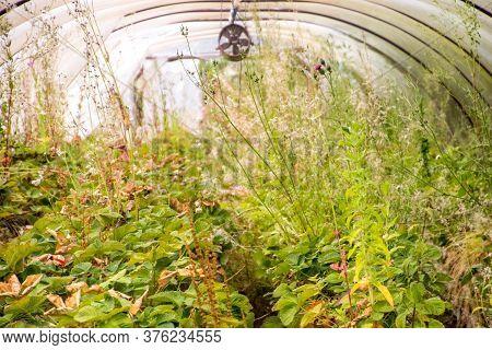 Fruit & Vegetable Growing Tent