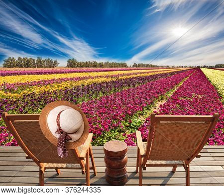 Magnificent flower striped carpet of multicolor garden buttercups - ranunculus. Israel. The concept of photo tourism. Folding wooden chairs for relaxing. The women's hat hung on the back of a chair