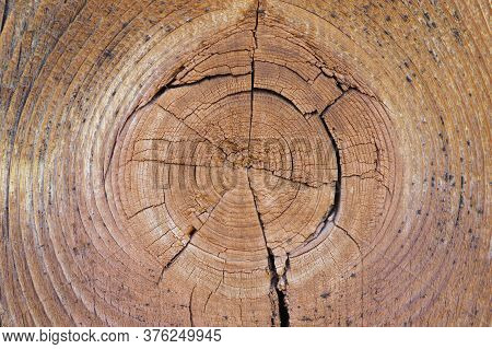 Cracked Bough On An Old Dried Weathered Wooden Board Close-up. Natural Light Brown Background Or Wal