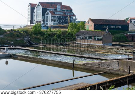 Zeeuwse Village Yerseke With Famous Oysters Wells For Cultivation Of Flat Belon And Creuse Oysters A