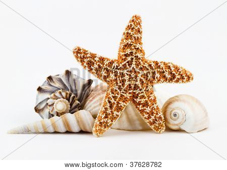 Seashells And A Starfish.