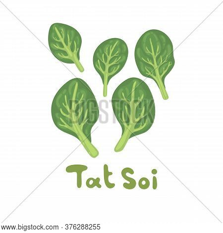 Tat Soi Illustration. Vector Herb On White Background. Fresh Eco Farm Vegetable. Botanical Hand-draw