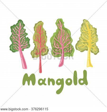 Mangold Or Swiss Chard Illustration. Mangold Leaves, Healthy Food Vegetable. Lifestyle Concept, Culi