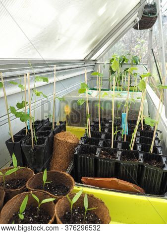 Growing Multiple Vegetable Seedlings In A Conservatory Workbench