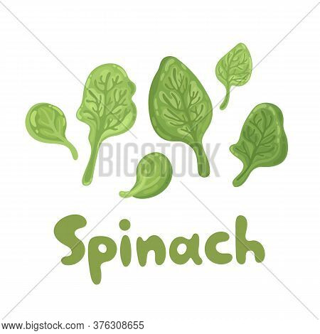Spinach Leaves - Cute Color Flat Icon. Agriculture, Gastronomy, Cooking Concept. Bunch Of Fresh Flyi