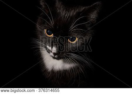 A Black And White Tuxedo Cat Shot In Lowkey Format