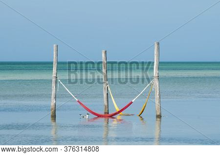 Hammocks Hanging Over The Mexican Caribbean Sea On Holbox Island - A Seagull Floats Nearby. In The B