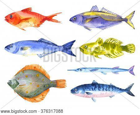Watercolor set of black sea fishes - horse mackerel, mackerel, flounder, bluefish, red sea bas, garfish, goby fish. Hand drawn illustration on white background