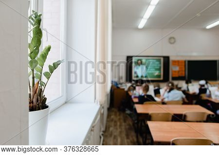 Indoor Plant In A Pot In The Classroom In Focus. Pupils Sit Back To The Camera At The Study Tables I