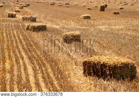 Hay Bales On The Golden Agriculture Field. Sunny Landscape With Straw Bales In Summer.  Yellow Wheat