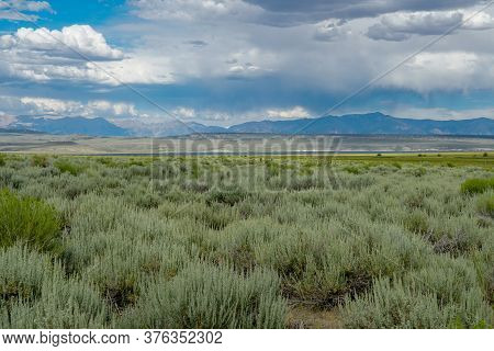 Green Wild Land With Sagebrush Plant And Mountain In The Background Next The Lake Crowley, Eastern S