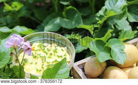 The Picture Shows Potato Salad And Potatoes In A Potato Field