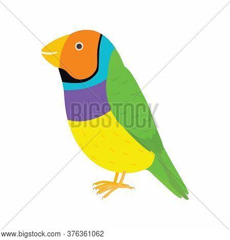 Amadina Finch Gouldian Finch, Erythrura Gouldiae Bird. Yellow Beautiful Exotic Bird.