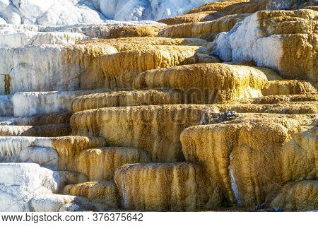 Close Up Of Palette Spring At Mammoth Hot Springs In Yellowstone National Park. Colorful Thermophile
