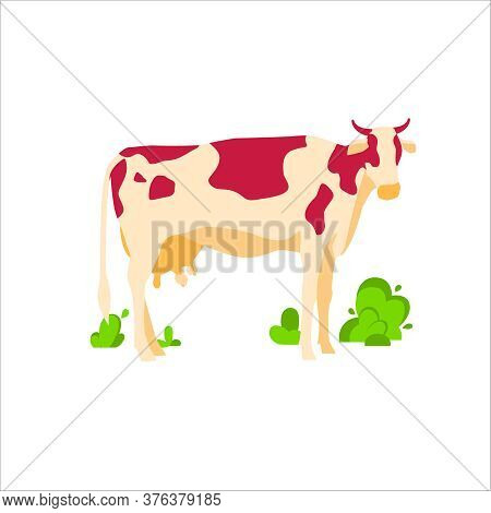 Spotted Grazing Cow Dairy Cattle. Domestic Herbivorous Animal, Farm Livestock. Agriculture And Farmi