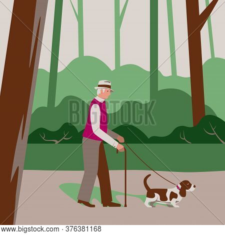 Elderly Old Man Senior Citizen Walks A Dog Basset Hound In A Forest Park, Cares, Outside Outdoor Act