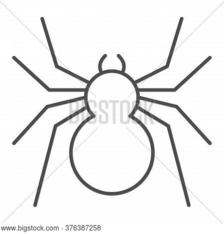 Spider Thin Line Icon, Insects Concept, Predatory Arachnid Sign On White Background, Classic Spider