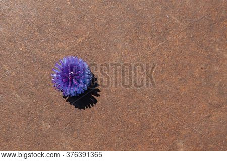 Abstract Virus Model On A Rusty Oxidized Metal Background. Rusted Metal Texture. Copy Space