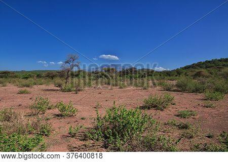 Baobabs In Village Of Bushmen, Africa