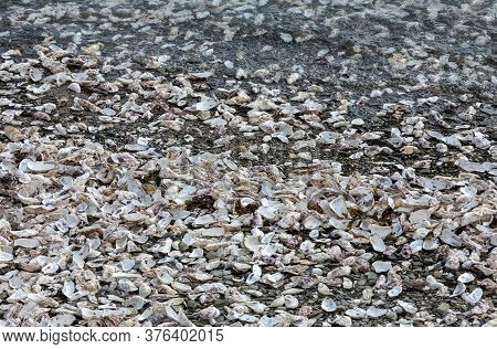 Housands Of Empty Shells Of Eaten Oysters Discarded On Sea Floor In Cancale, Famous For Oyster Farms