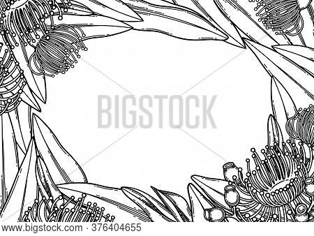 Graphic Eucalyptus Flowers And Leaves. Vector Floral Design