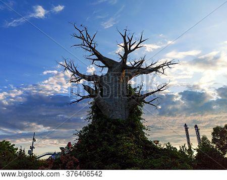 Sochi, Russia, Summer 2020. Giant Tree. Sochi Park During The Period Of Quarantine Coronavirus. No P