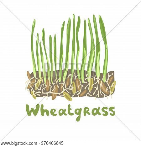 Wheatgrass Cute Stock Illustration. Nutritious Homegrown Wheatgrass. Superfood Vegetable Barley Gras