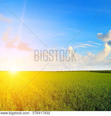 Landscape Of Green Wheat Field Under Scenic Summer Colorful Dramatic Sky In Sunset Dawn Sunrise.