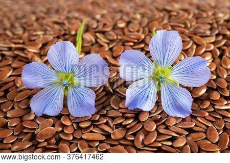 Blue Flax Flowers  On A Flax Seeds