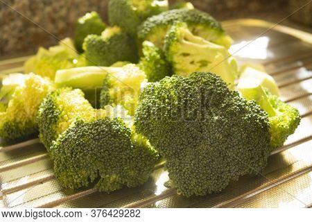 Sicilian Freshly Picked Broccoli On A Sink