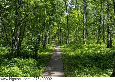 Beautiful Path In The Forest For Sports. The Path Goes Deep Into The Forest. The Concept Of A Place