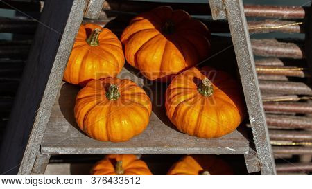 Little Orange Pumpkins On A Wooden Shelf, Closeup Crop Crop Of Farm Vegetables Squash. Ripe Sunny Br