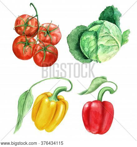Watercolor Vegetables Vintage Watercolor Botanical Illustration. Collection Of Tomatoes, Green Cabba