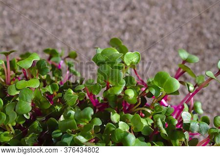 The Picture Shows Healthy Cress In The Garden