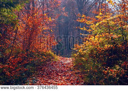 Autumn Forest Background. Path Covered With Red Foliage In Autumn Forest With Morning Mist. Colorful