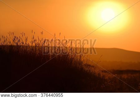 Grass Silhouetted And Sunset Light In Summer