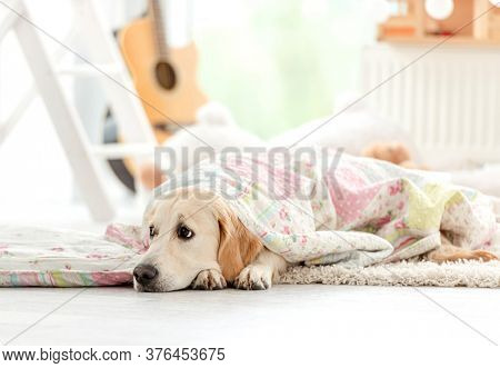 Cute golden retriever covered with blanket in children's room