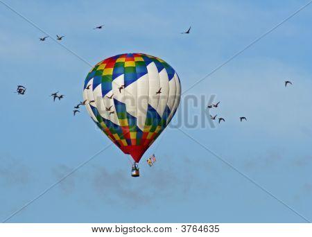 Birds And Balloon