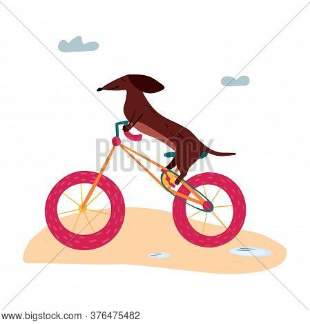 A Vector Illustration Of A Cute Dachshund Wiener Dog On A Bicycle. Summertime Illustration