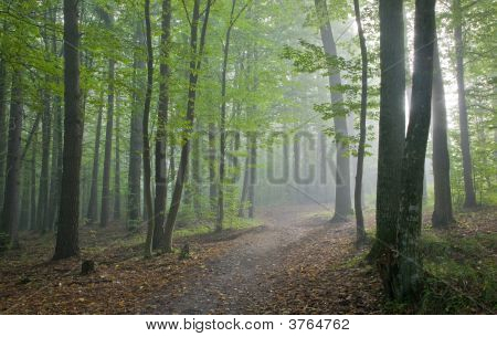 Path Crossing Misty Autumnal Forest