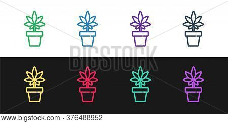 Set Line Medical Marijuana Or Cannabis Plant In Pot Icon Isolated On Black And White Background. Mar