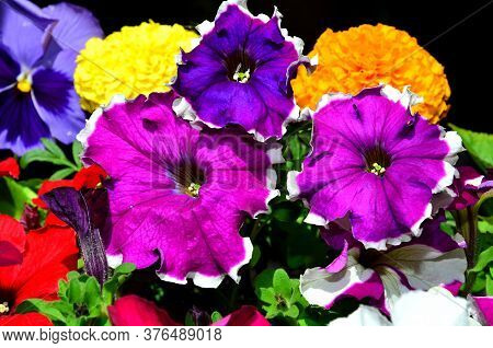 Bright Set Of Multi-colored Flowers As A Background.